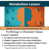 Metabolism Lesson and Activity