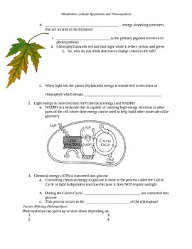 Metabolism Photosynthesis Cellular Respiration Guided Notes Outline