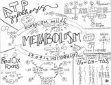 Metabolism Sketch Notes