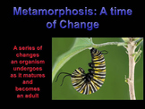 Metamorphosis: A time of Change (almost totally animated)