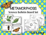 Metamorphosis Bulletin Board Set. Science Bulletin Board idea. Butterflies.