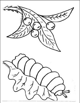 Metamorphosis:  Butterfly Books