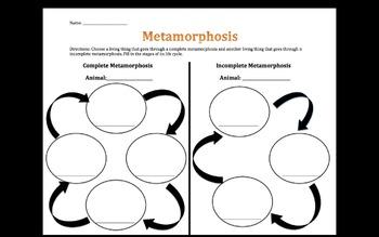 Metamorphosis Life Cycles