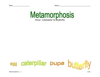 Metamorphosis - Life of a Butterfly - Illustrated Graphic Organizer