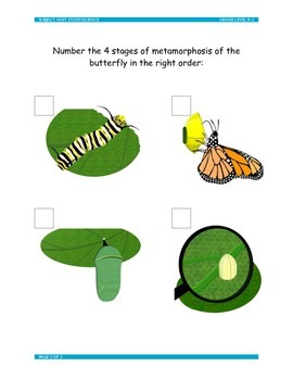 Metamorphosis: Meet the Caterpillar and the Butterfly