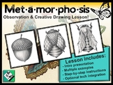 Metamorphosis Observational & Creative Drawing. Great sub plan! Quick & Easy!