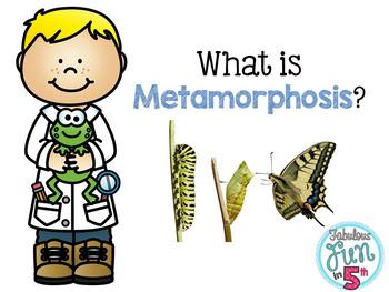 Metamorphosis PowerPoint and Foldable