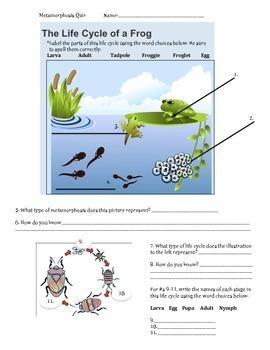 Metamorphosis Quiz MJ tpt