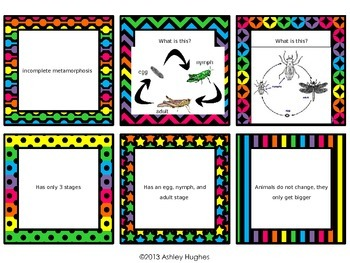 Metamorphosis Review Task Cards