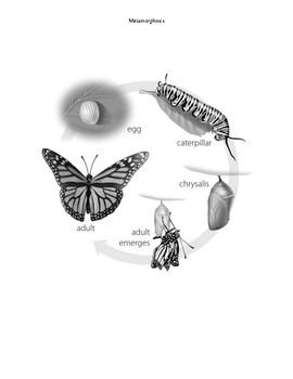 Metamorphosis SUPPLEMENTAL AID