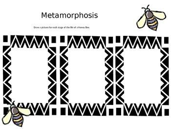 Metamorphosis for  Honey Bee!