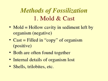 Methods of Fossilization