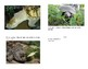 Michigan Snapping Turtles Mini Booklet