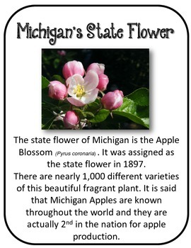 Michigan State History Unit.  U.S. State History.  34 Pages!!