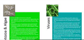 Micro-organisms Microbe Mystery (Diversity of Life Activity 6)