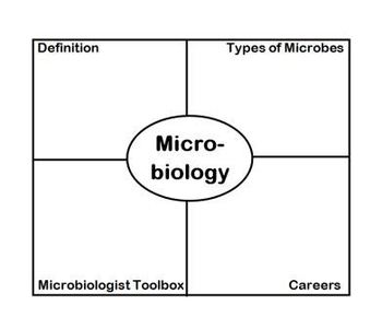 Microbiology Frayer Diagram