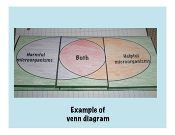 Microorganisms Interactive Venn Diagram Foldable