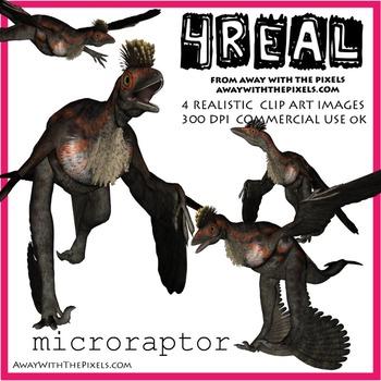 Microraptor - 4 Realistic Dinosaur Clip Art Images