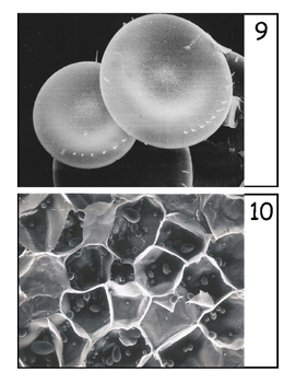 Microscope Guessing Game #2 - SEM Images