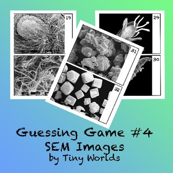 Microscope Image Guessing Game #4 with Scanning Electron Microscope Pictures