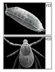 Microscope Image Guessing Game with Scanning Electron Microscope Pictures