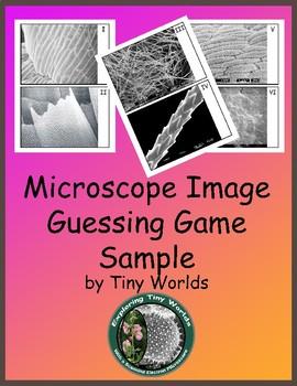 Microscope Image Guessing Game SEM Sample