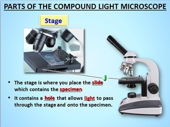Microscope Parts - PowerPoi... by Tangstar Science | Teachers Pay ...