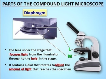 Microscope Parts - PowerPoint Free! {Editable}