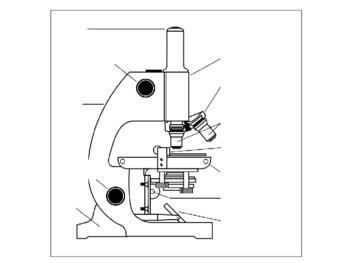 Microscope Labeling Worksheets Teaching Resources Tpt