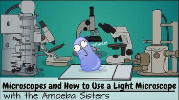 Amoeba Sisters Microscope Worksheet Answers - Micropedia