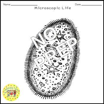 Microscopic Life Crossword Puzzle