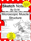 Microscopic Muscle Sketch Doodle Notes, Student Notes, incl FIB Vers & Wksheet!
