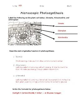 Microscopic Photosynthesis