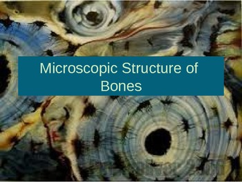 Microscopic Structure of Bones