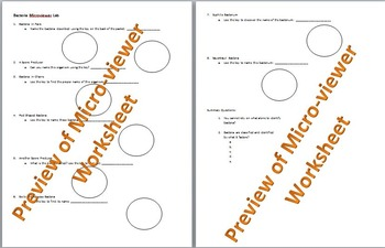 Microviewer Worksheet: Diversity in Bacteria