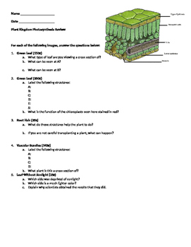 Microviewer Worksheet: Plant Kingdom Photosynthesis Review