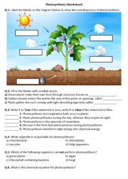 Middle School Biology Worksheets Bundle