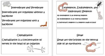 Middle School Life Science- A Look at Invertebrates and Vertebrates
