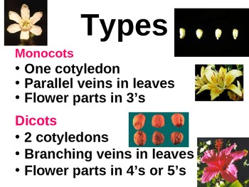 Middle School Life Science (Plants): Angiosperms (PowerPoint interactive notes)