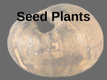 Middle School Life Science (Plants): Seed Plants (interactive PowerPoint notes)