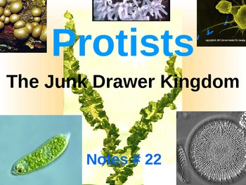 Middle School Life Science: Protists (PowerPoint interactive notes)
