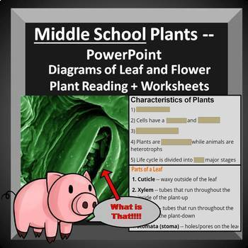 Plants PowerPoint + Notes, Worksheets, Reading, Diagrams (Middle School)