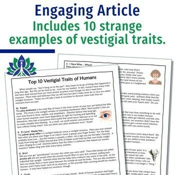 Evolution Evidence Vestigial Structures Activity w/ Worksheet MS-LS4-2 MS-LS4-3