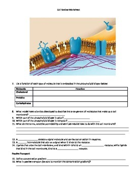 Midterm Review Guide for High School Biology