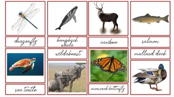 Migrating Animal 3 Part Cards