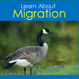 Bird Migration PowerPoint