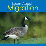 Migration | Kindergarten 1st 2nd 3rd 4th 5th Grade | Animal Migration PowerPoint