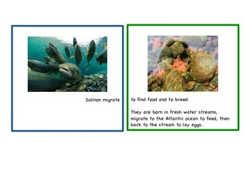 Migration Habits of Animals