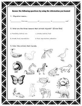 Migration // Science // Worksheet // Case Study // PPT // Animal Migration