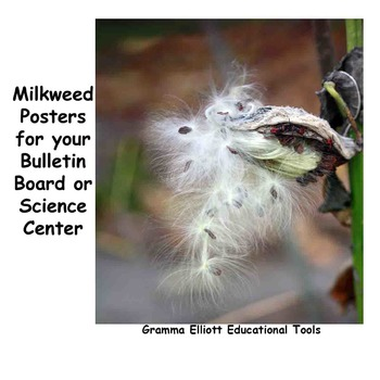 Posters of Milkweed  Photos - Favorite Plant of the Monarch Butterfly